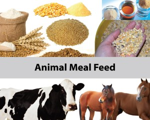 Animal Meal Feed